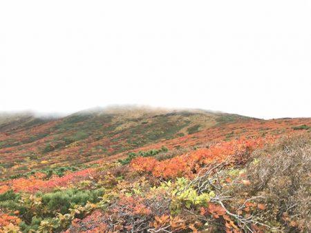 栗駒山の紅葉は、今年もやっぱり凄かったです(^_^)